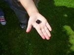 blackberry 2  (2)